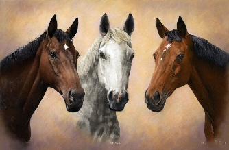 HORSE PORTRAIT GALLERY 2.